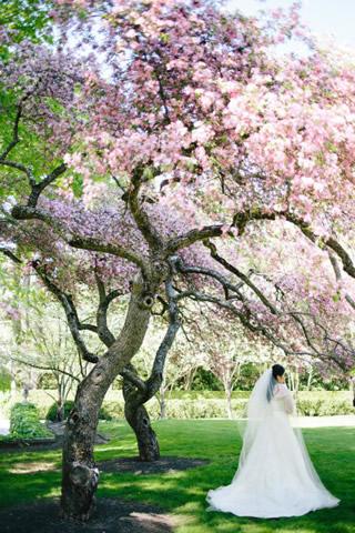 桜を使った海外ウエディングフォト48